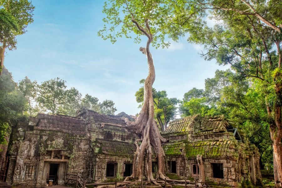 Ta Prohm temple 2