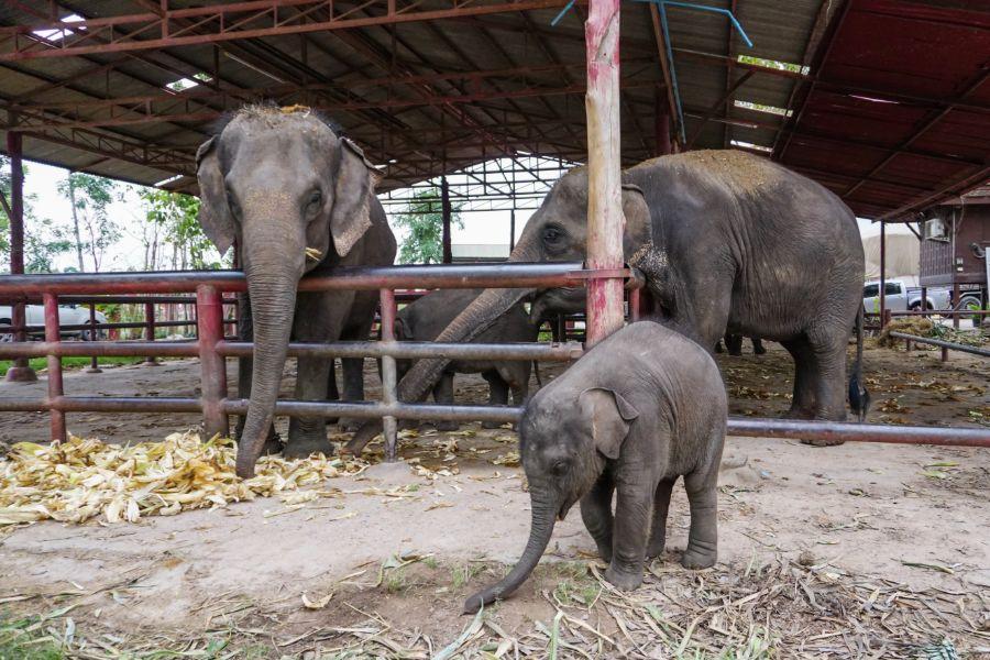 Thailand Ayutthaya Elephant Palace Phaniat Corral of Thailand oilfanten