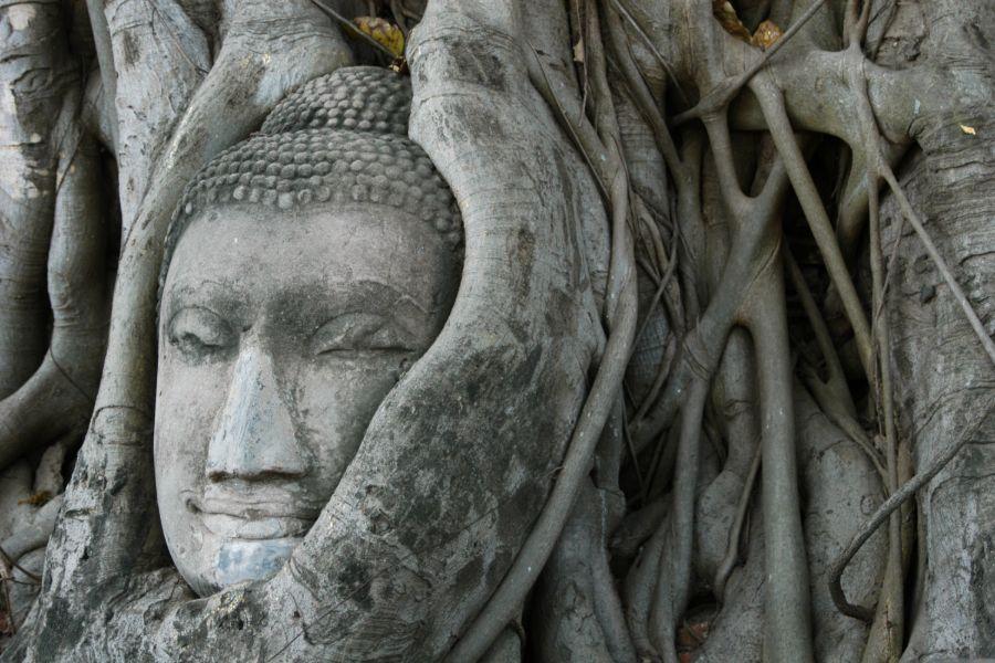 Thailand Ayutthaya Wat Mahathat tempel boom met boeddha hoofd