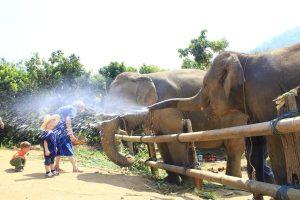 Olifantenverzorger bij Eco-project