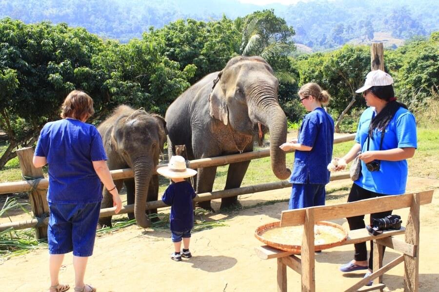 Thailand Chiang Mai Olifanten trainer voor 1 dag 02
