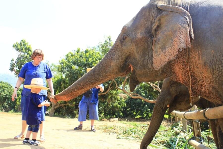 Thailand Chiang Mai Olifanten trainer voor 1 dag 05