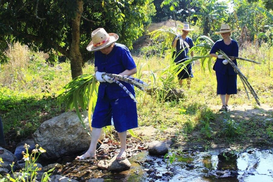 Thailand Chiang Mai Olifanten trainer voor 1 dag 06