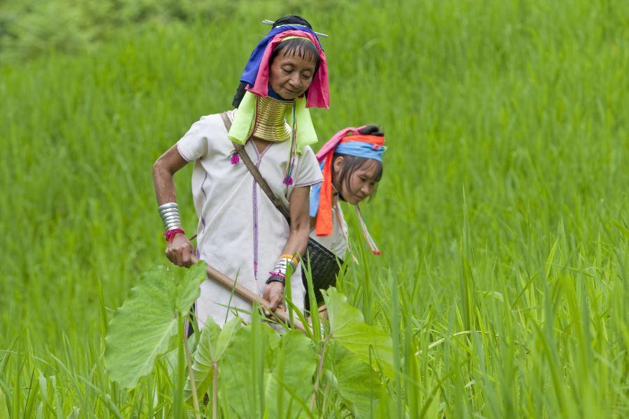 Thailand Chiang Mai long neck village bevolkingsgroep bergstam