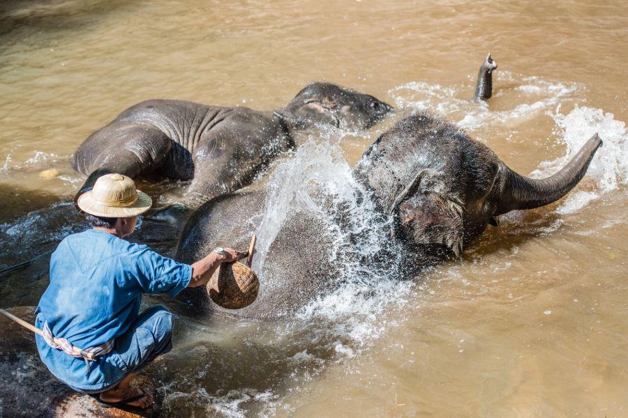 Thailand Chiang Mai olifant verzorgen mahout 2