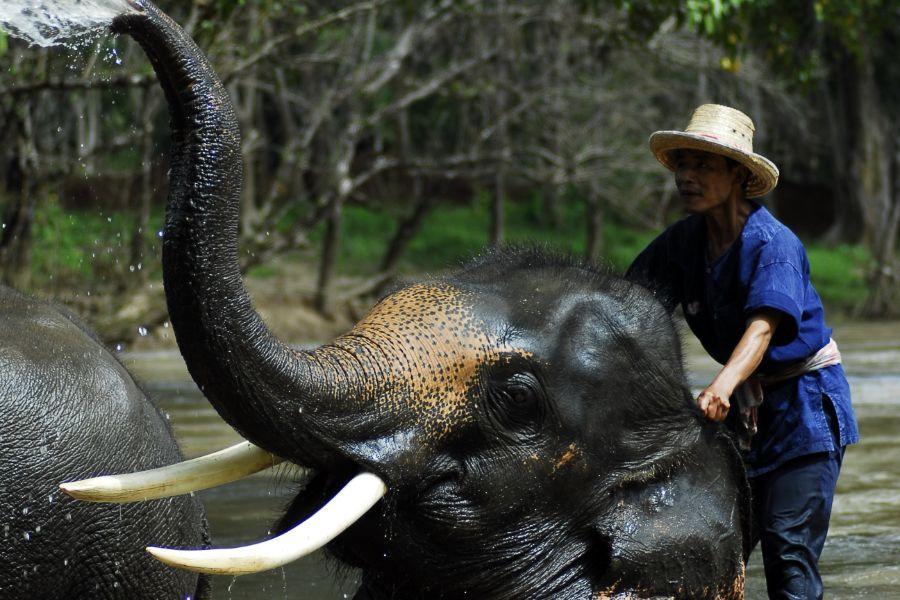 Thailand Chiang Mai olifant verzorgen mahout