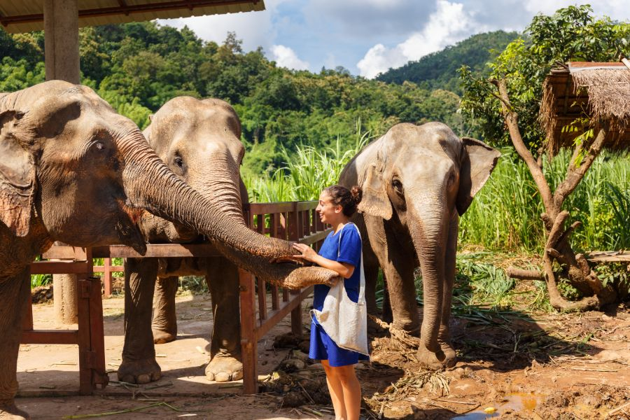 Ultieme olifant beleving in Chiang Mai