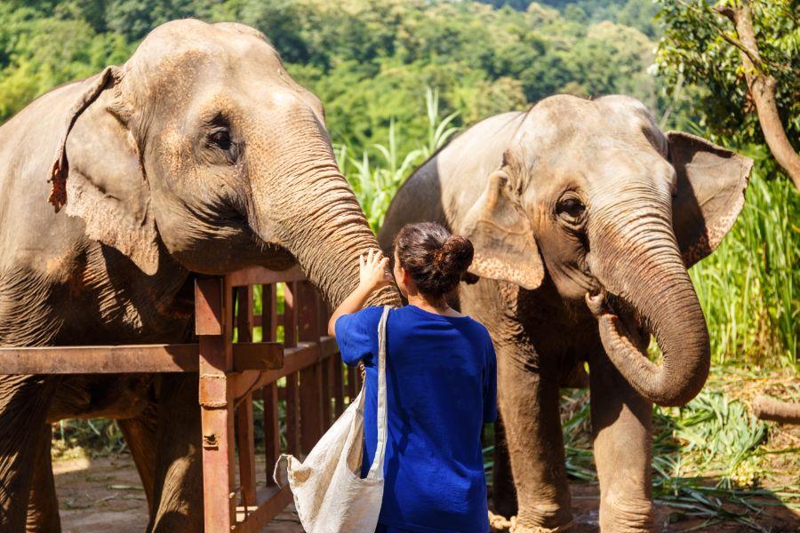 Thailand Chiang Mai olifant voeren banaan