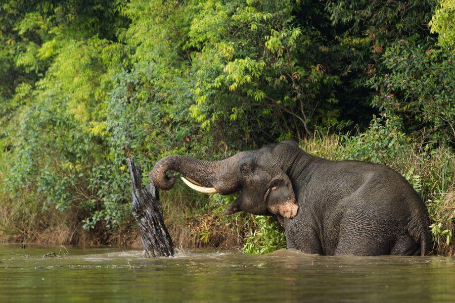 Thailand Khao Yai Nationaal Park 1