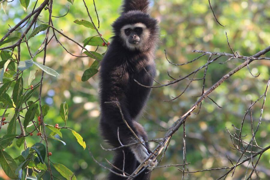 Thailand Khao Yai Nationaal Park 9