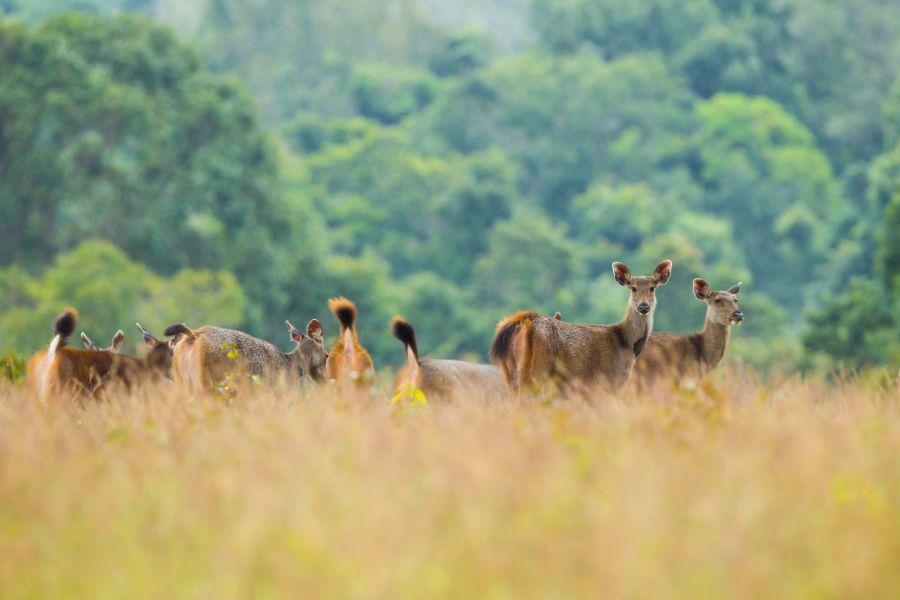 Thailand Khao Yai Nationaal Park Wilde dieren