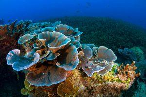 Koh Tan, Coral Island