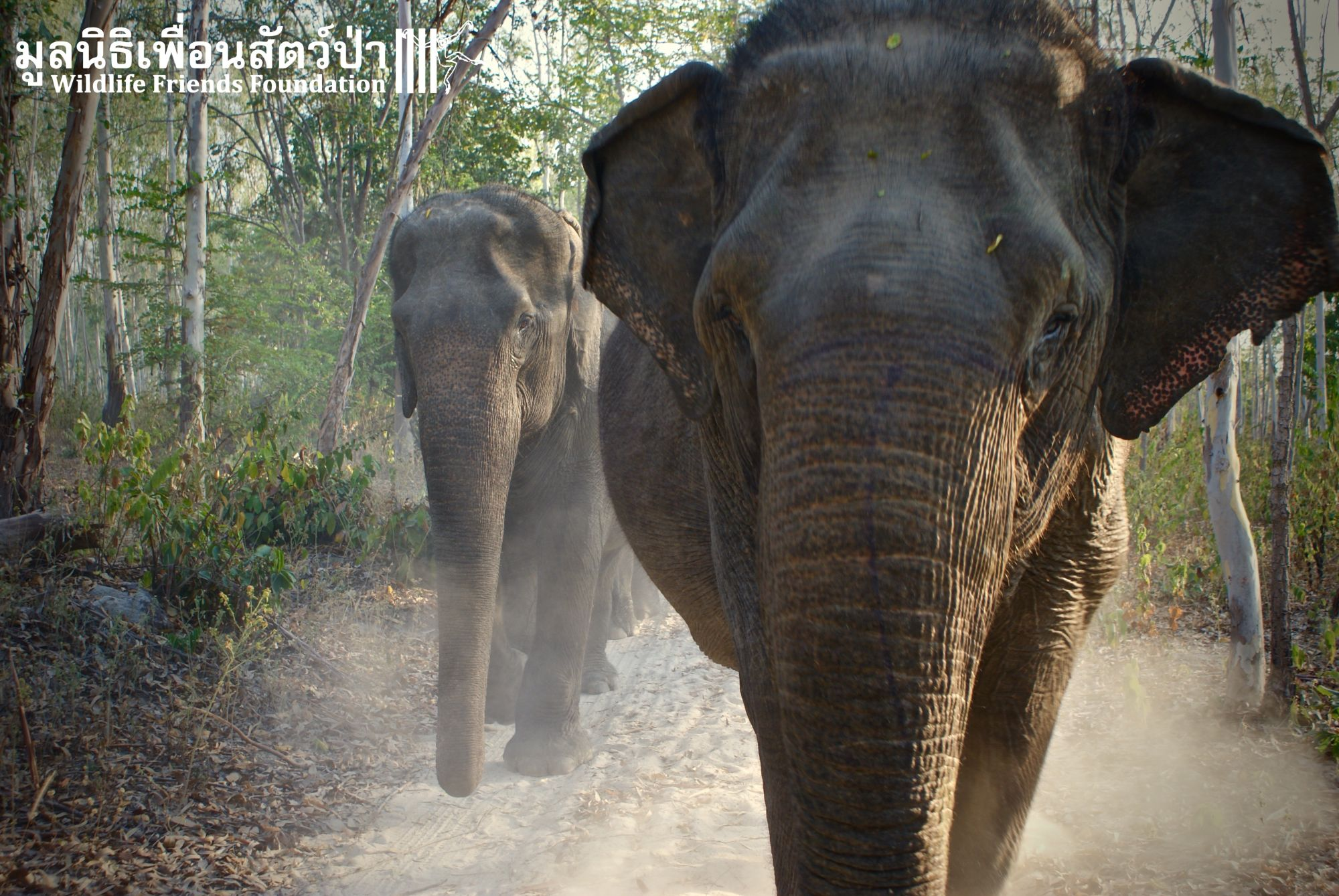 Thailand Phetchaburi Wildlife Friends Foundation Thailand olifant