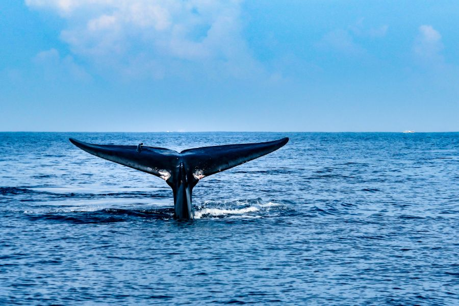Whales 8