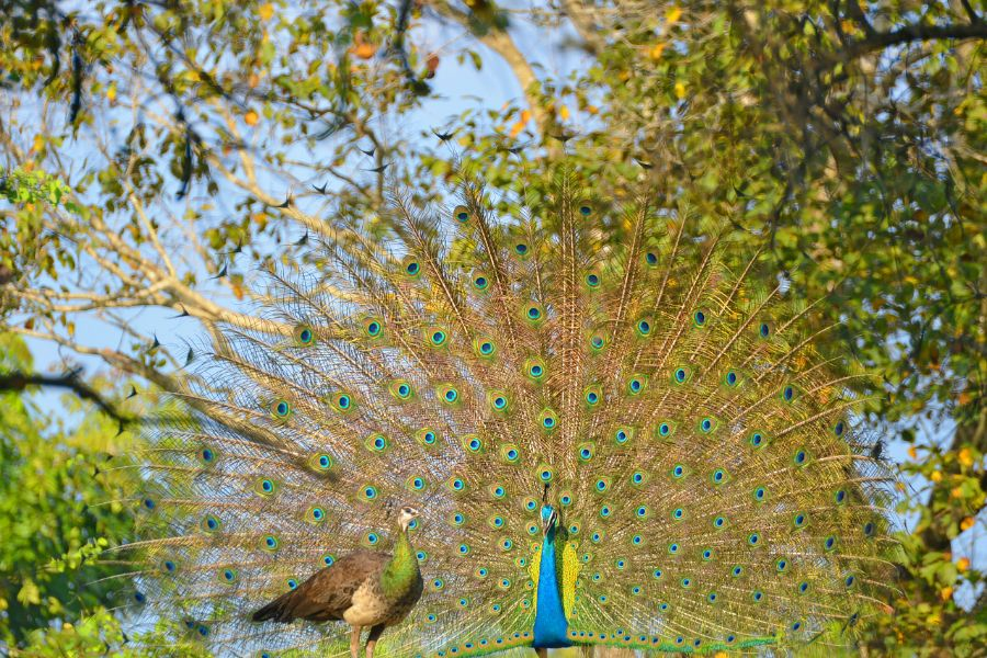 Wilpattu National Park 1