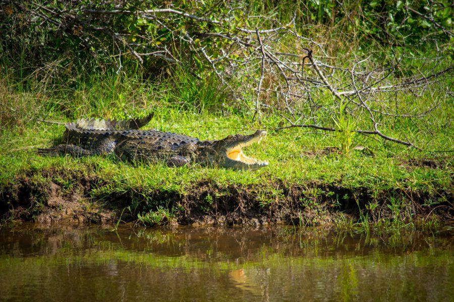 Wilpattu National Park 10