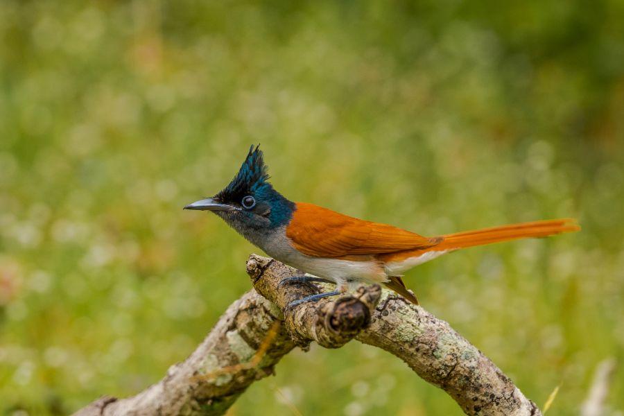 Wilpattu National Park 9