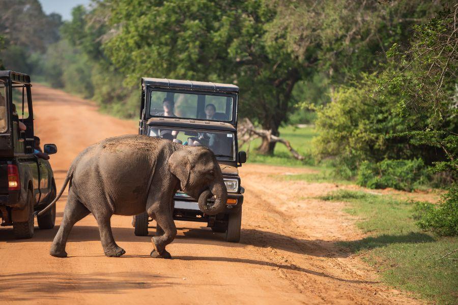 Yala National Park 5