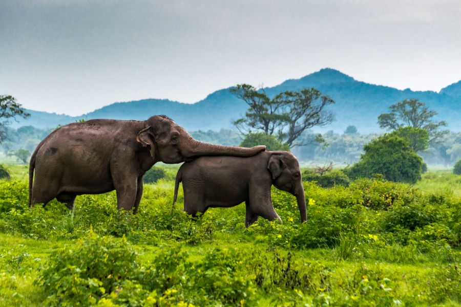 Yala National Park 7