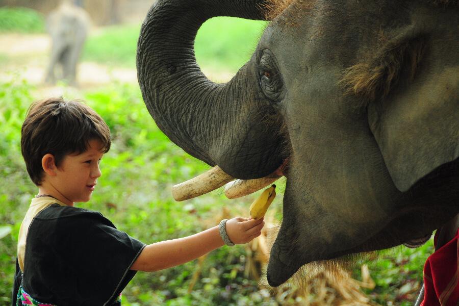 Boek de reis '2-Daagse familie jungle trekking'