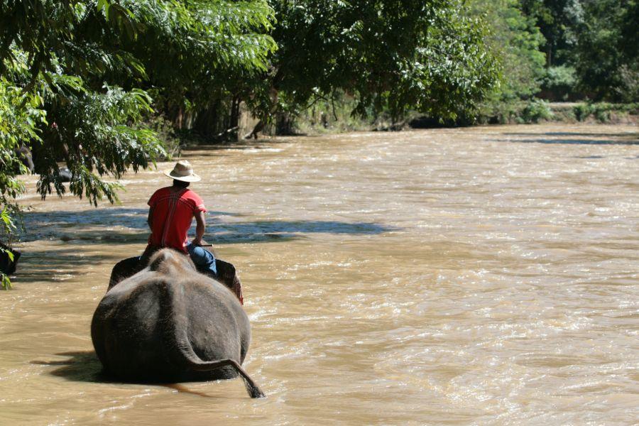 olifant vriendelijk park thailand