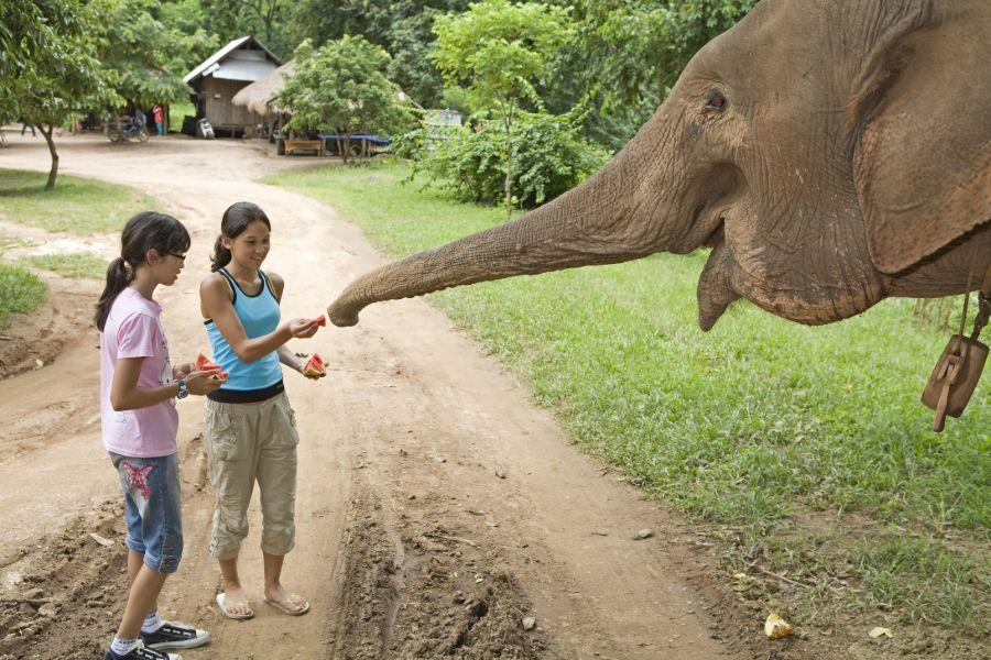 olifanten verzorgen thailand 3