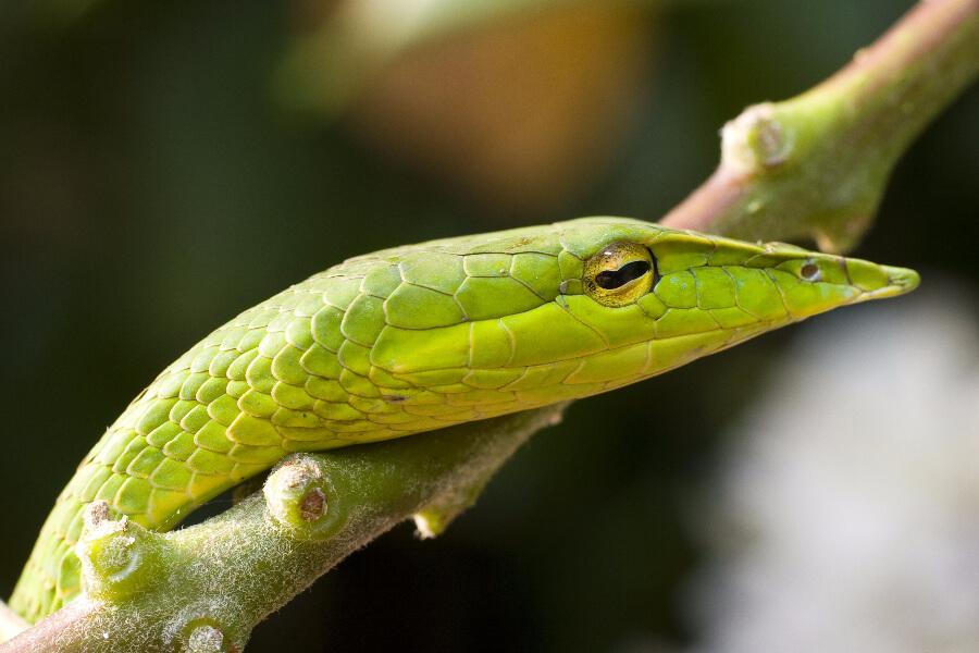 Cambodja Phnom Koulen Nationaal Park Slang natuur