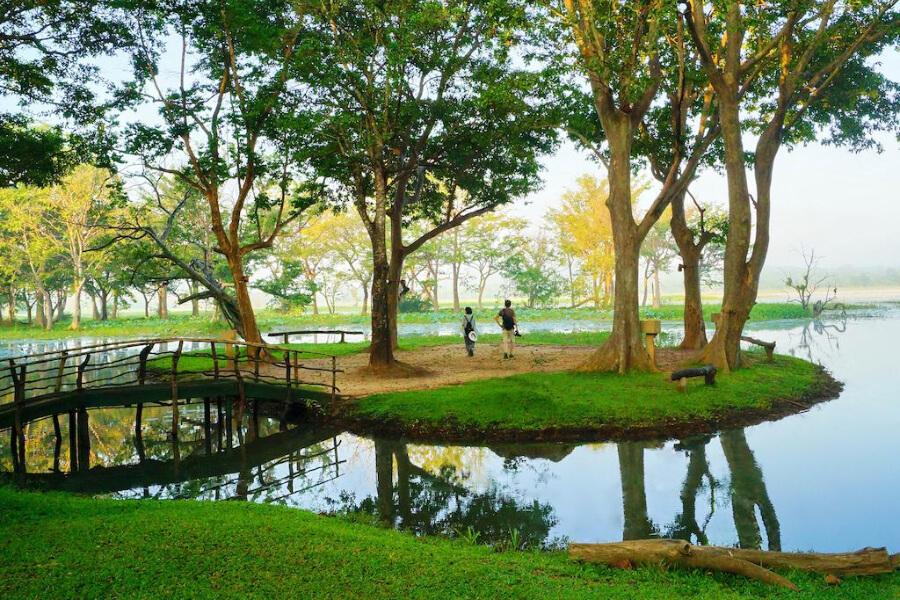 Hotels Sri Lanka Harabana Cinnamon Lodge 26