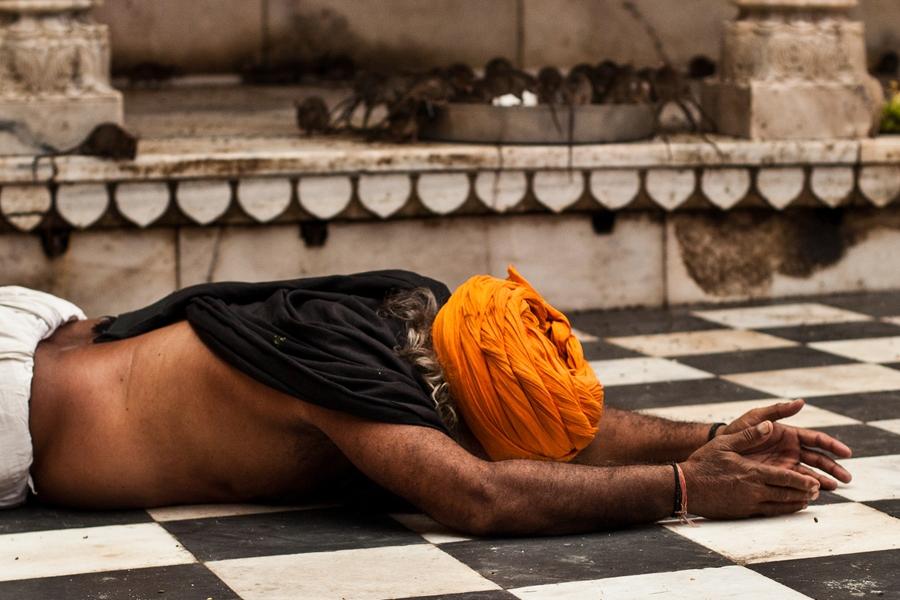 India Rajasthan Karni Mata Rat Tempel bidden