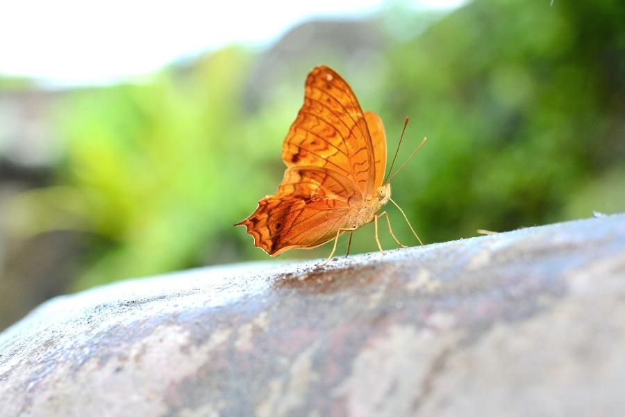 Indonesie Bali Bali National Park Vlinder