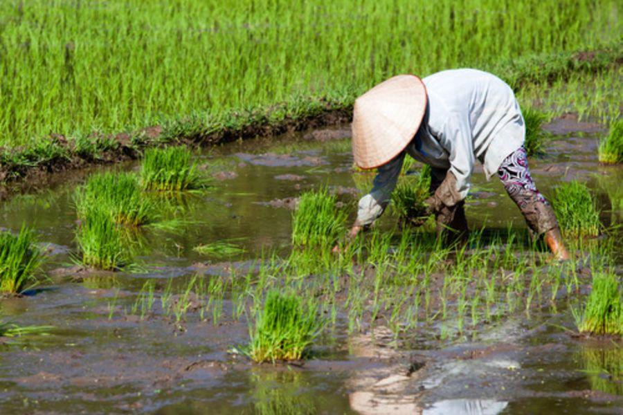Indonesie Bali Platteland Bevolking aan het werk