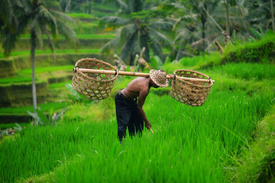 Indonesie Bali Ubud lokale boer