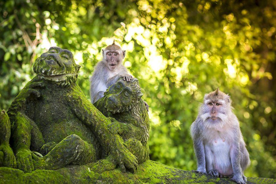 Indonesie Bali monkey forest