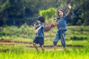 Het Balinese plattelandsleven