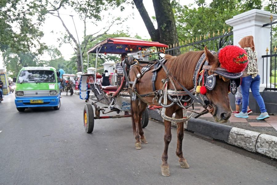 Indonesie Java Adhong