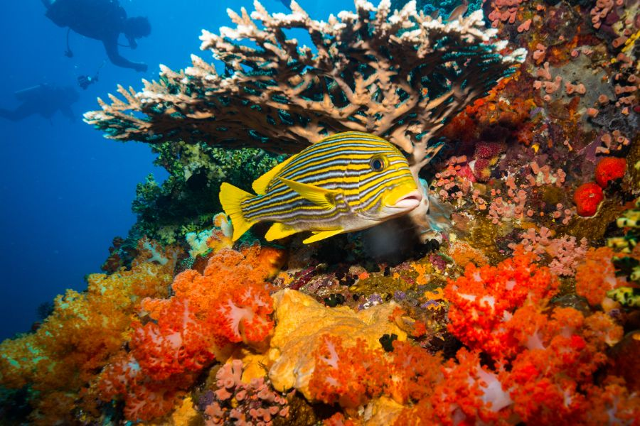 Indonesie Komodo Nationaal Park zee onderwaterwereld vis koraalrif