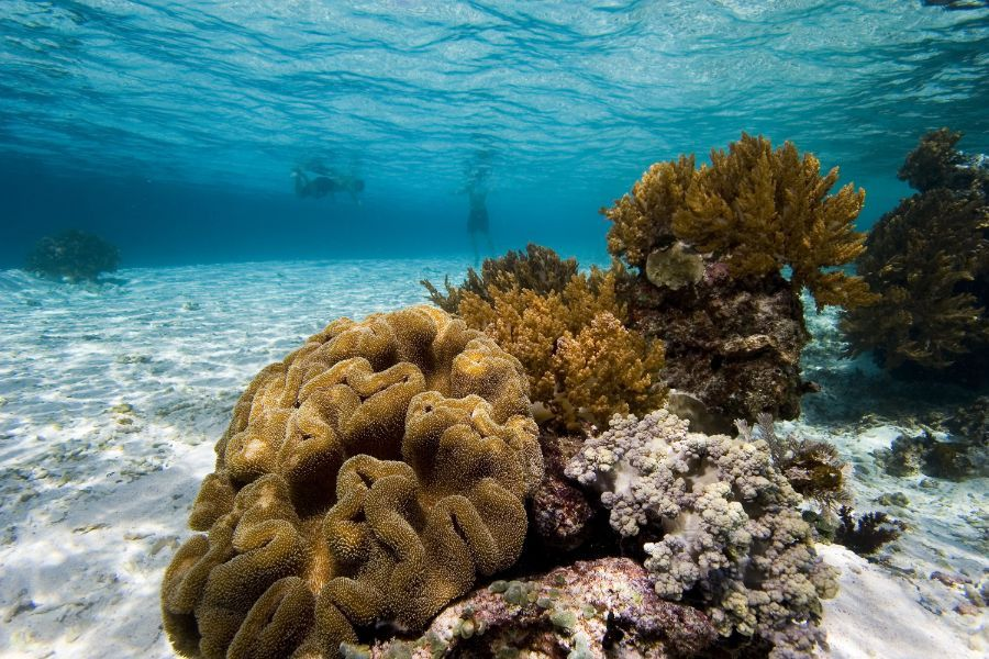 Indonesie Komodo onderwater zee snorkelen eiland