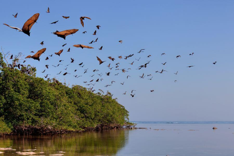 Indonesie Komodo vogels