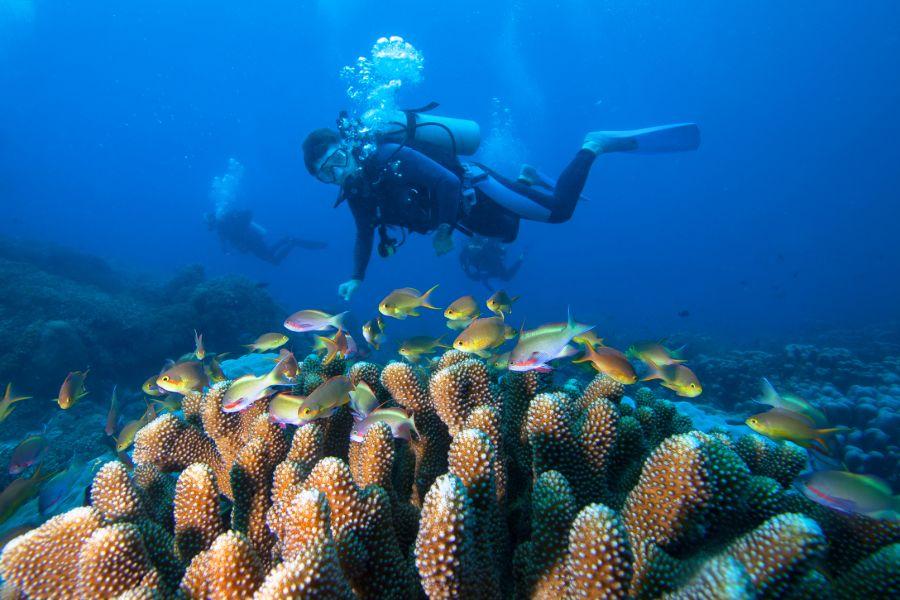 Indonesie Raja Ampat boten strand zee tropisch eiland duiken snorkelen koraal vis