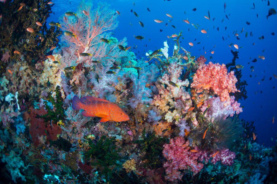 Indonesie Raja Ampat onderwaterwereld duiken snorkelen vissen koraal