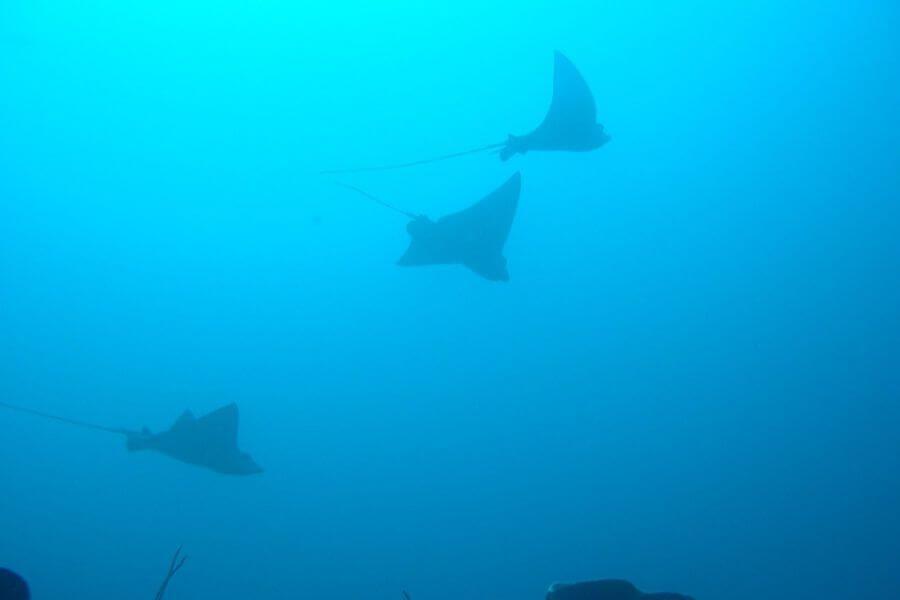 Indonesie Sulawesi onderwaterwereld vis snorkelen
