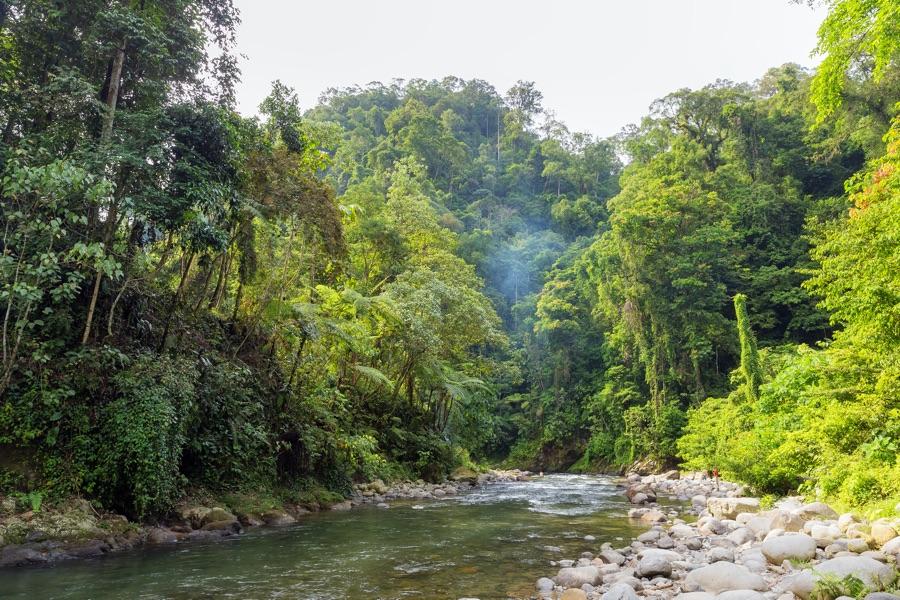 Indonesie Sumatra Leuser Nationaal Park