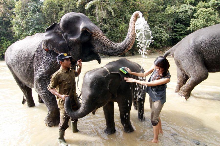 Dag 4: Tangkahan jungle trekking met olifanten wassen