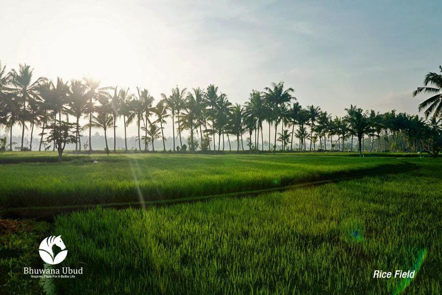 Indonesie Ubud Bhuwana Hotel and Farming 2