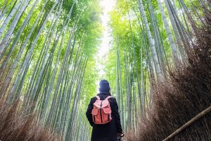 Kyoto Sagano Bamboebos & Arashiyama Wandelexcursie