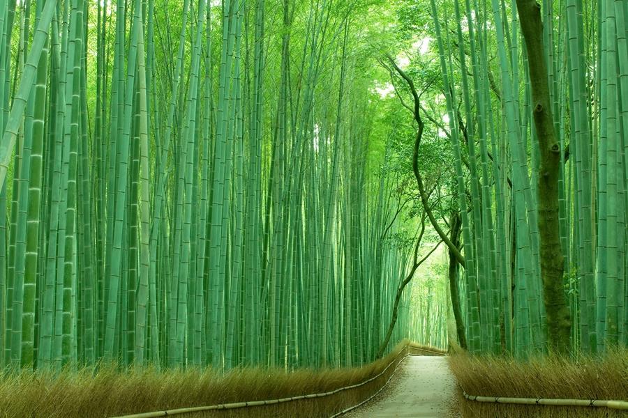 Japan Kyoto Takebayashi bamboe bos