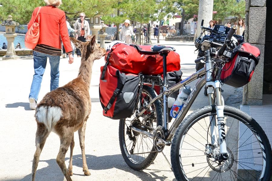 Japan Miyajima Eland bij fiets