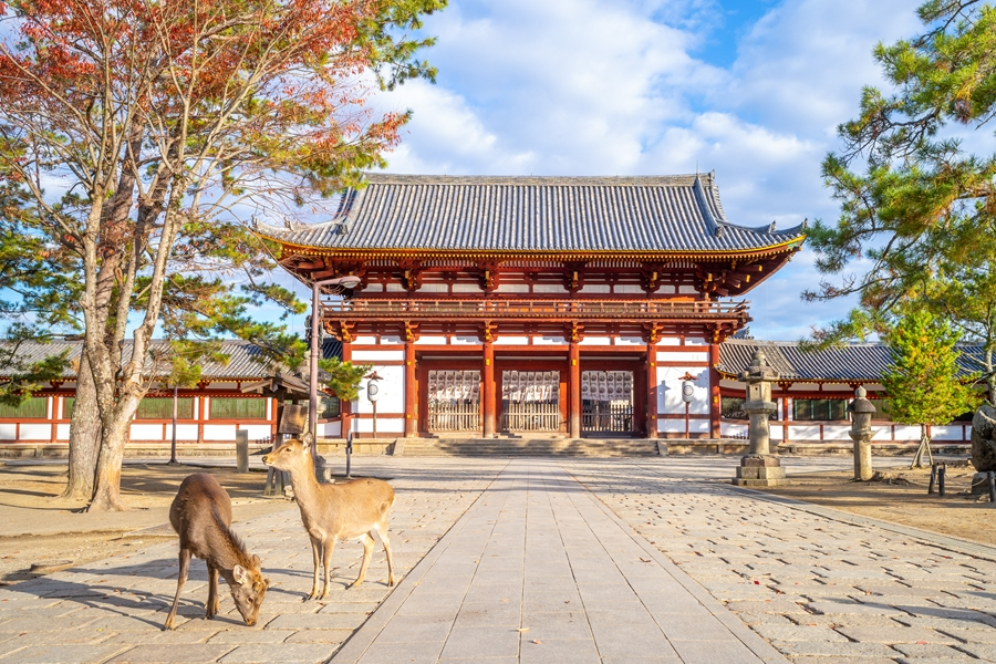 Japan Nara Todai ji tempel met elanden