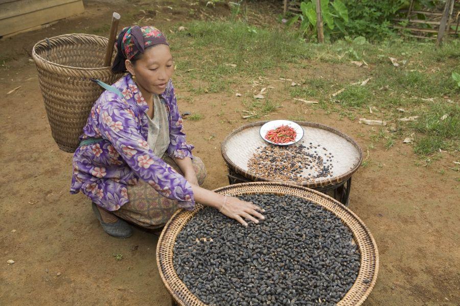 Laos Hmong woman bergstam lokale bevolking