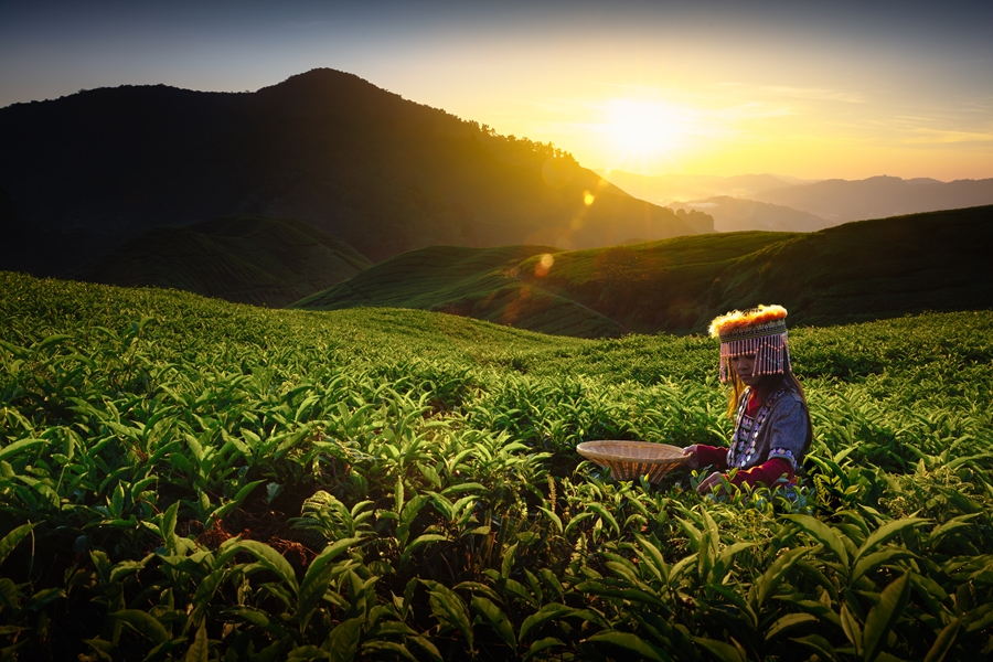 Maleisie Cameron Highlands Theeplantages zonsondergang 3